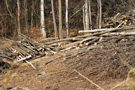 Агентство лесного хозяйства. Сохранять – значит отнимать?