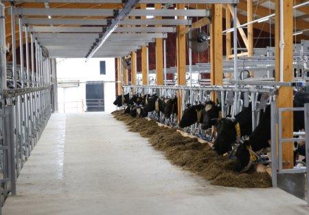 Реализация молока потребительским кооперативам позволила сельскому населению получить около 1 млрд рублей доходов
