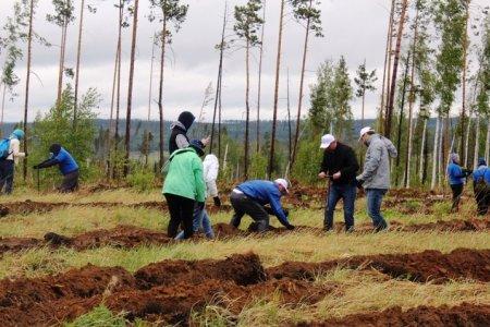 В Иркутской области восстановили более 30 тысяч га леса