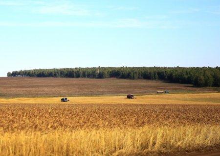 В Иркутской области заготовлено 300 тысяч тонн кормов