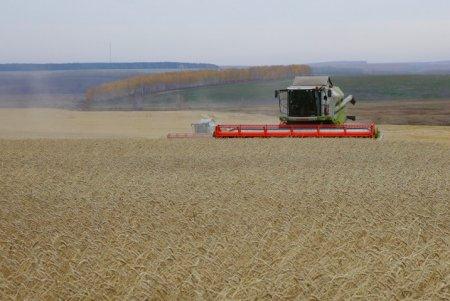 Объем экспорта сельхозпродукции Иркутской области по итогам 2017 года составил более полутора миллиардов рублей