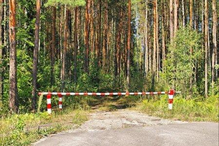 Маркировка заготавливаемой древесины на территории Иркутской области уже позволила значительно снизить объемы незаконной рубки леса