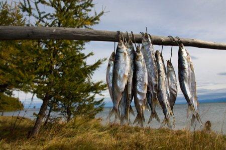 М. Щапов: Распоряжение о трудоустройстве байкальских рыбаков необходимо было давать два года назад