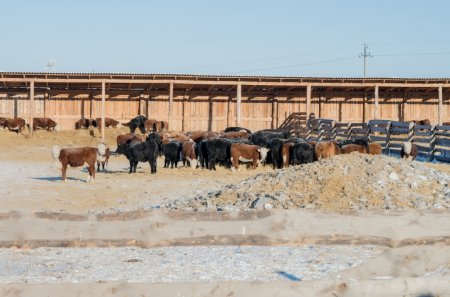 На поддержку фермеров в Иркутской области выделят больше 109 миллионов рублей