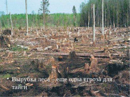 Лес валят - деньги летят