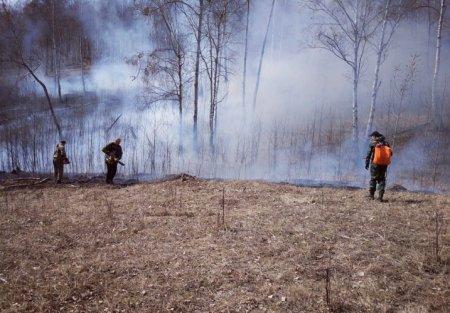 Весне дорогу, а пожарам – стоп! Областные депутаты рекомендовали увеличить финансирование лесопожарной охраны
