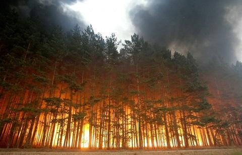 Депутат Михаил Щапов предложил объединить полномочия по тушению лесных пожаров в одном ведомстве